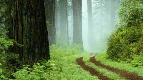 Хто прибере до рук комунальні ліси Чернігівщини?