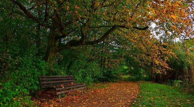 Осінь — не тільки пора садіння дерев, а й час тривог і надій