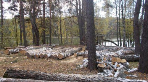 Поліція нагадує про відповідальність за незаконну порубку лісу