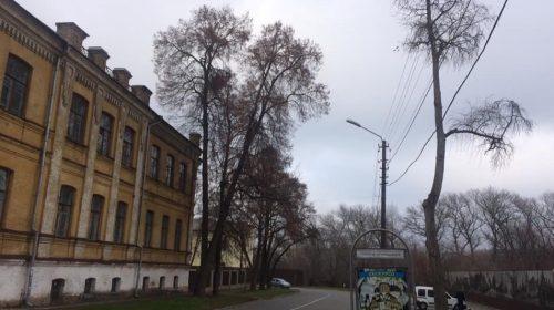 Кронування допомагає зберегти й омолодити дерево