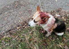 Чиновник жестоко издевался над собакой