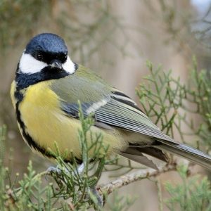 Птахи, які зимують у регіональному ландшафтному парку «Ялівщина»