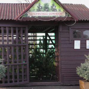 Приємний клопіт для лісівників Чернігівщини