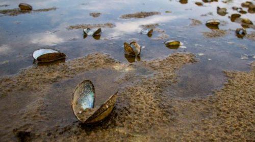 Річка Десна активно міліє