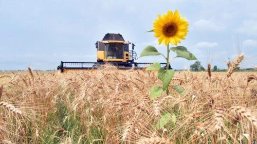 Депутатка облради закликає владу підтримувати експорт агропродукції