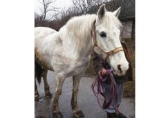 Носівська поліція розшукала й повернула власнику викраденого коня