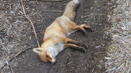 Своїми діями через жадібність агрохолдинги вбивають природу!