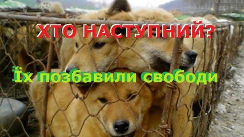 Влада бере приклад з авторитарних держав! До чого це призведе?