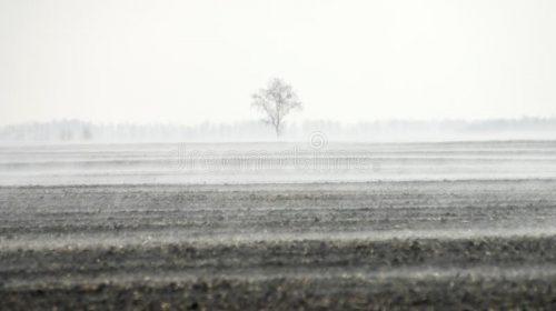 2 га землі вартістю в 1 мільйон гривень повернули громаді