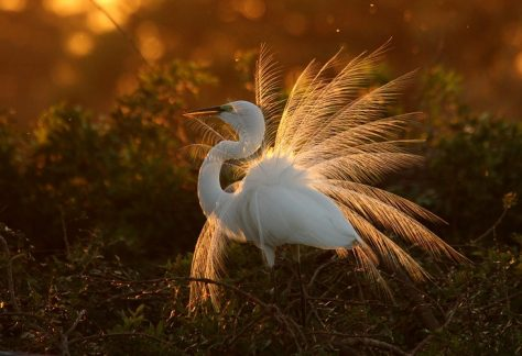 Птахи Мезинського природного парку