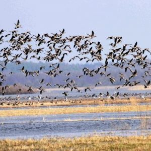 Цікаво про перелітних птахів