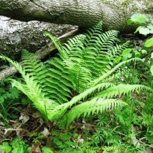 Мезинський парк для збереження видів флори та фауни