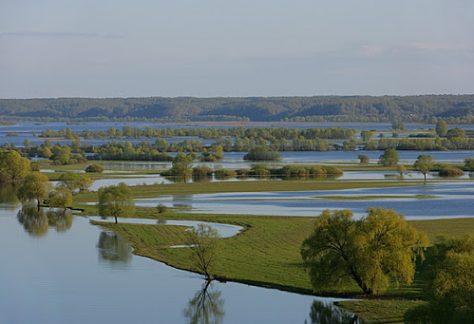 Вода: куди й чому зникає на Чернігівщині?