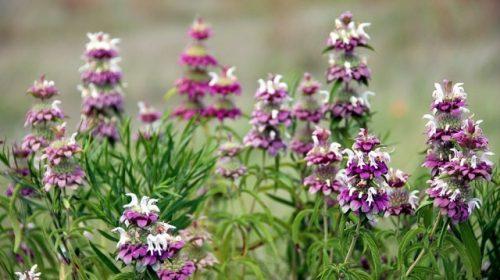 Замість хімічних препаратів — рослини та чагарники