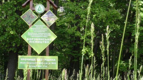 «Базарщина» — урочище лісових культур. Відео