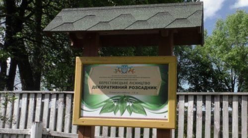 Тут вирощують і реалізують декоративні саджанці та сіянці. Відео