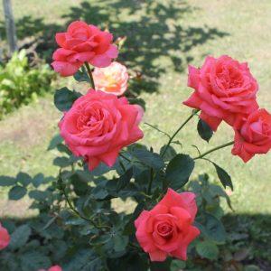 Дім, де живуть квіти: у саду і на… полотні