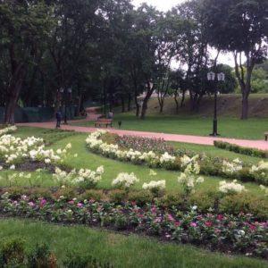 Багаторічними квітковими рослинами можна помилуватися у Чернігові