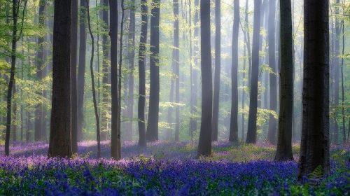 Використання лісових ресурсів. Все, що потрібно знати