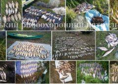 Тонну риби та понад 16 км сіток вилучили у браконьєрів