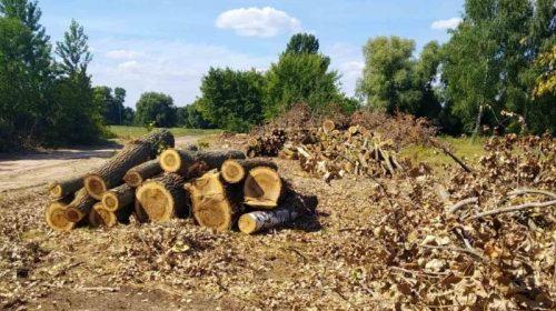 Збитки від незаконної вирубки дерев сягнули більше 5 млн гривень