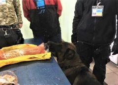 Службовий пес Ральф виявив наркотики у пасажирів
