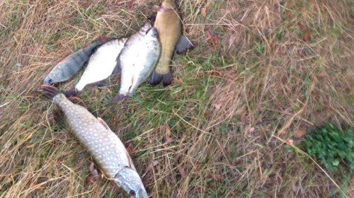 Браконьєра-рибалку спіймали на Менщині