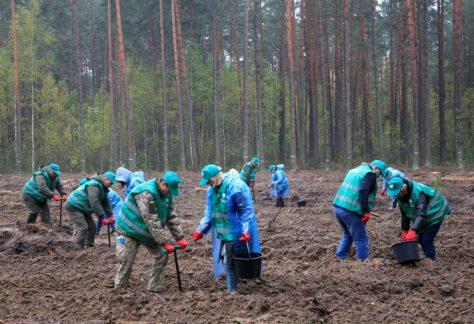 На Чернігівщині примножували зелений скарб держави