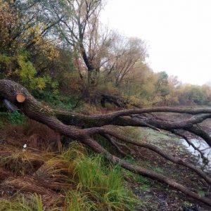 У захисній смузі невідомі знищили 62 дерева
