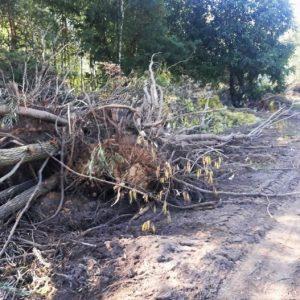 Ось що виявили інспектори-екологи біля річки Білоус на Чернігівщині