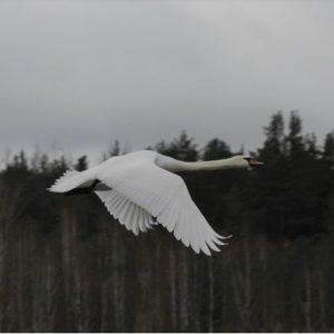Розпочинається Всеукраїнська акція «Нагодуємо птахів узимку»