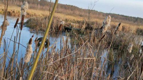 У перший зимовий день на Чернігівщині…