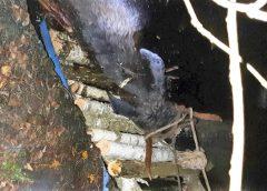 Лось уночі впав у 5-метрову яму.Рятували його гуртом