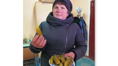 На Чернігівщині зберегли секрети вирощування «ніжинського огірка»