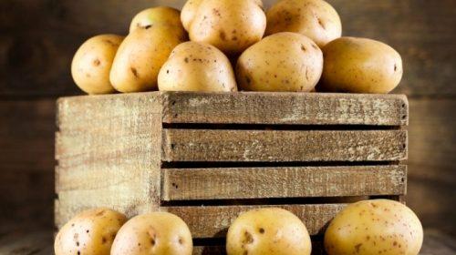 Картоплю для чіпсів провідних фірм вирощує фермер на Чернігівщині