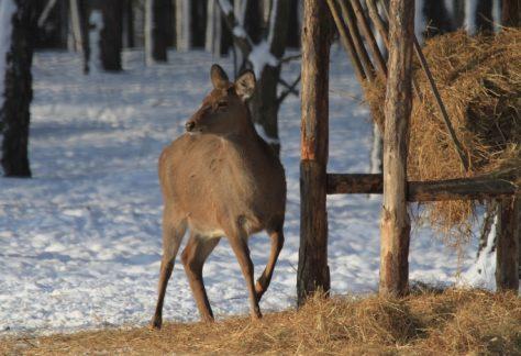 У мисливських господарствах рахуватимуть диких тварин