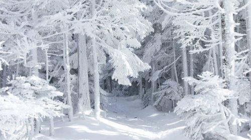 «Білі гардини зима пошила…»