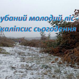 Чи понесуть покарання ті, хто знищує природу?
