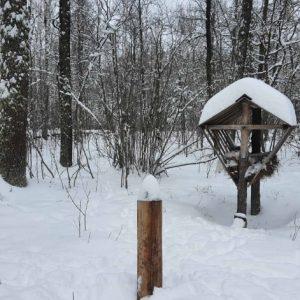 На Чернігівщині визначають чисельність диких тварин