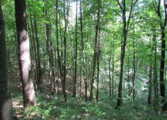 3 березня – Всесвітній день дикої природи: Мезинський парк