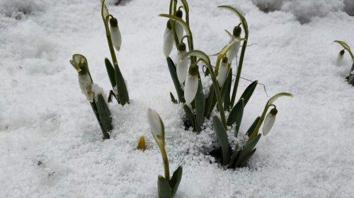 Зачаровує зимовий ліс наприкінці березня!