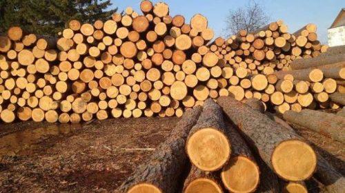 100 років тому деревина була стратегічним запасом для Чернігівщини
