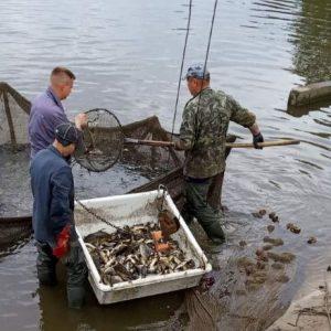 У річку Стрижень у Чернігові запустили 15 тисяч коропа