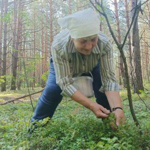 Ліси Чернігівщини годують багатьох селян