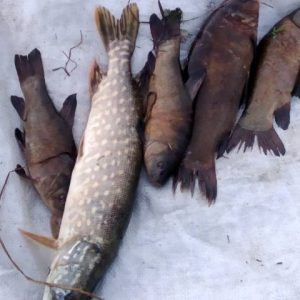 На Чернігівщині браконьєри незаконно здобули понад 20 кг риби