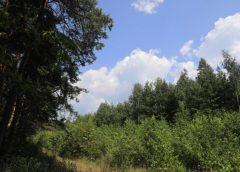 Ні – знищенню самосійних лісів! Так вважають на Чернігівщині